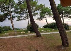 Vent Andernos-les-Bains 33510 Forte rafales de vent sur la bassin  d'Arcachon