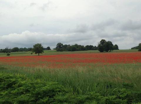 Une campagne en fleurs