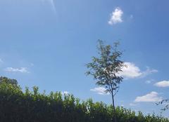 Ciel Villetoureix 24600 Plein soleil à Villetoureix