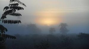 Ciel Lue 40210 Les landes dans la brume matinale