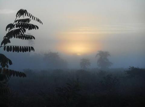 Les landes dans la brume matinale