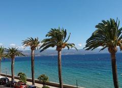 Chaleur Ajaccio 20000 Les palmiers de Corse.
