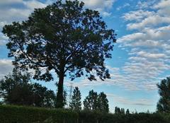 Ciel Estaires 59940 Frêne posant fièrement sur un beau ciel dégradé.