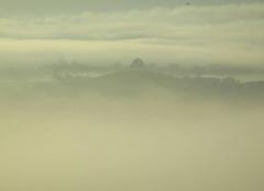 Brouillard Maurs 15600 8h20 - Brouillard ensoleillé sur l'arbre seul de Maurs (15)