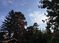Relevés Esquelbecq 59470 Enfin du soleil après des pluies interminables !!