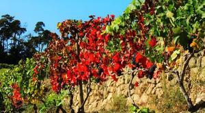 Faune/Flore Talencieux 07340 La vigne