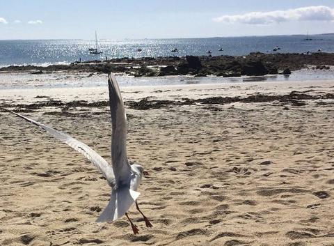 Envolée d'une mouette sur la grande plage
