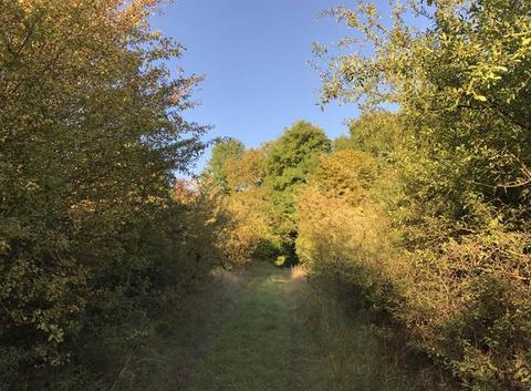 Des chemins ensoleillés pour entrer dans l'automne