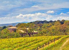 Faune/Flore Ramatuelle 83350 La vigne du Château Volterra