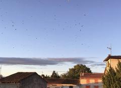 Prévision saisonnière Bonnac 09100 Les hirondelles se rassemblent pour nous quitter