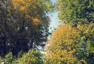 Faune/Flore Saran 45770 Couleurs d'automne