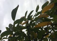 Nuages Ellon 14250 Noix d'automne