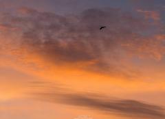 Ciel Saint-Sorlin-en-Bugey 01150 Lever du jour