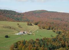 Faune/Flore Berrwiller 68500 Couleurs d'automne sur les Vosges au Markstein