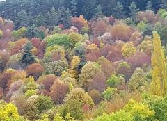 Faune/Flore Le Chambon 07160 Les couleurs de l'automne
