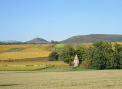 Faune/Flore Hartmannswiller 68500 Couleurs d'automne