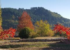 Faune/Flore Mariac 07160 La feuille d'automne ...