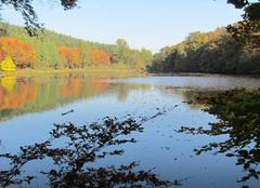 Faune/Flore Habay Le lac du Château d' Habay en automne