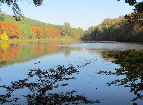 Le lac du Château d' Habay en automne