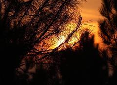 Ciel Lue 40210 Couché de soleil