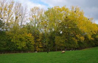 Faune/Flore Regny 42630 Paysage d'automne