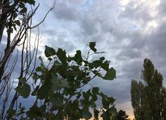 Nuages Mours-Saint-Eusebe 26540 Ciel de soirée tourmenté