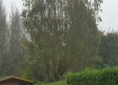 Brouillard Voisins-le-Bretonneux 78960 Résidence Joli Pré