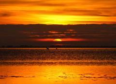 Mer Vic-la-Gardiole 34110 Lever du soleil