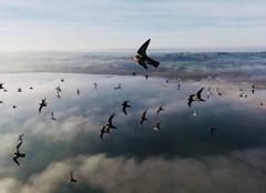 Insolite Goulven 29890 Vol avec les oiseaux au dessus de La baie de Goulven
