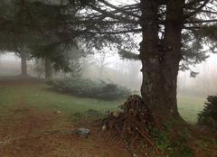 Brouillard Mont-Dore 63240 Dans le brouillard