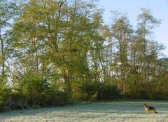 Froid Griesheim-sur-Souffel 67370 Premières gelées