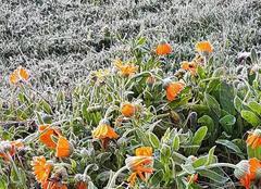 Froid Recoubeau-Jansac 26310 Le gel existe aussi dans le sud de la Drôme