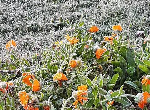 Le gel existe aussi dans le sud de la Drôme