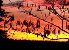 Nuages La Chapelle-Heulin 44330  Coucher de soleil dans le vignoble nantais.