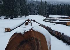 Neige Autrans 38880 Premieres neiges dans le Vercors