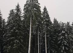 Neige Autrans 38880 Premieres neiges