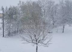 Neige La Chaumusse 39150 Neige dans le jura