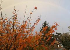 Ciel Viarmes 95270 Arc en ciel en automne