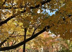 Ciel Paris-18 75018 Au square, les feuilles sont dorées, cuivrées...
