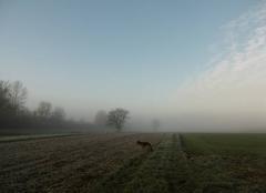 Ciel Griesheim-sur-Souffel 67370 Gelées et brumes matinales