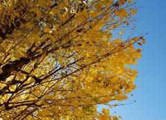 Insolite Tassin-la-Demi-Lune 69160 Couleurs d'automne