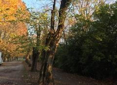 Ciel Romans-sur-Isere 26100 L'automne sur les berges de l'Isère