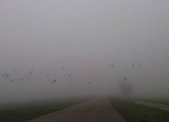 Brouillard Lohr 67290 Brouillard avec des corbeaux.