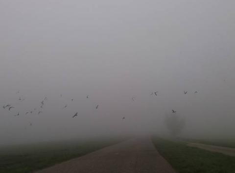 Brouillard avec des corbeaux.