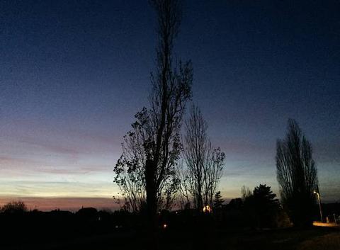 Arbres dans le crépuscule