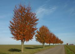 Ciel Griesheim-sur-Souffel 67370 Couleurs d'automne