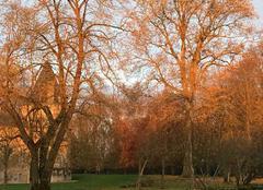 Faune/Flore Clemery 54610 Petit matin d?automne