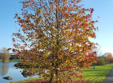 L'automne et sa beauté....