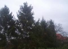Pluie Lievin 62800 Forêt