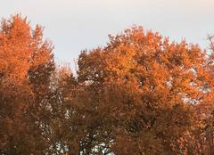 Faune/Flore Castelnau-de-Medoc 33480 Couleur d?automne